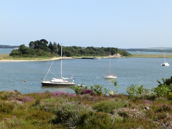 From the Arne RSPB reserve