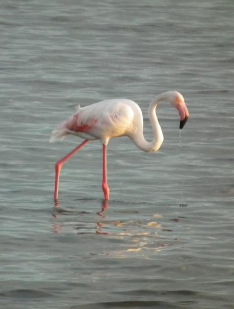 Pretty Flamingo 2
